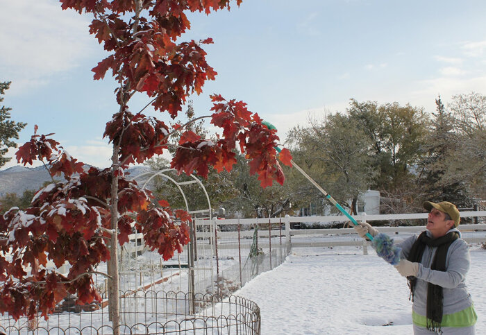 removing-snow-from-plants_700x483.jpg