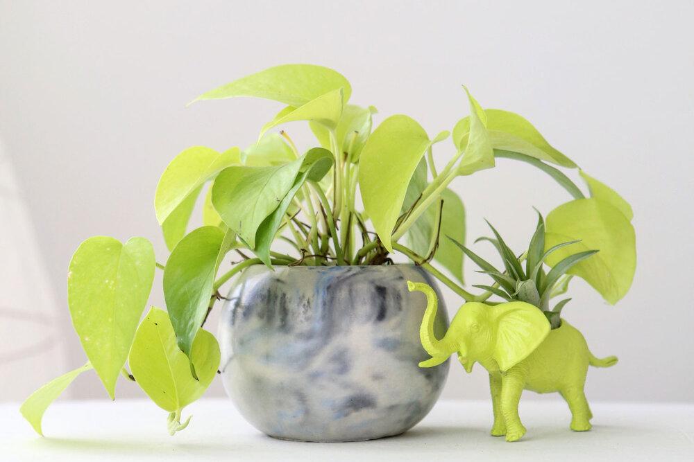 Neon Pothos photo: modern plant life