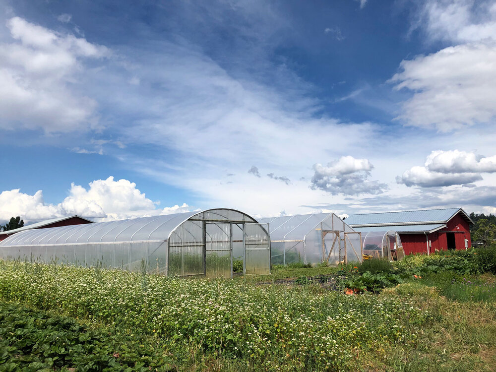 Greenhouses and the barn
