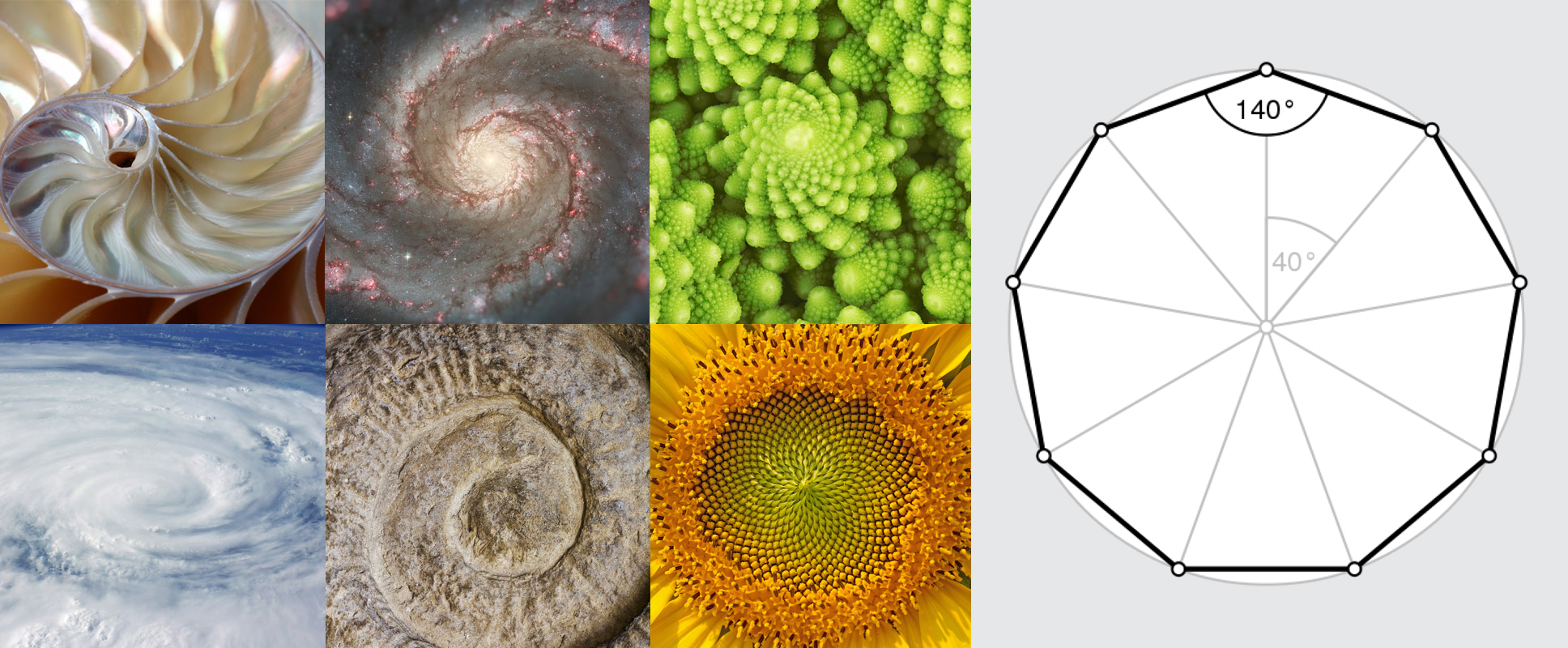 Above: Moodboard for the development of the logo and the visual identity. Below: early logo sketches based on the idea of the Fibonacci sequence.