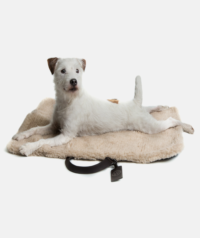 13-cloud114-tumi-Travel-Bed-dogs-parson-perros.jpg