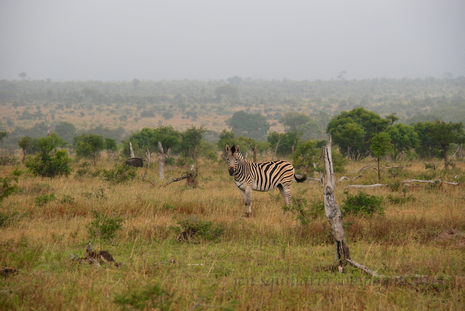 This photo, taken at Ngala Private Game Reserve, gives a fairly good idea (despite the fog) of the expanse of this reserve.