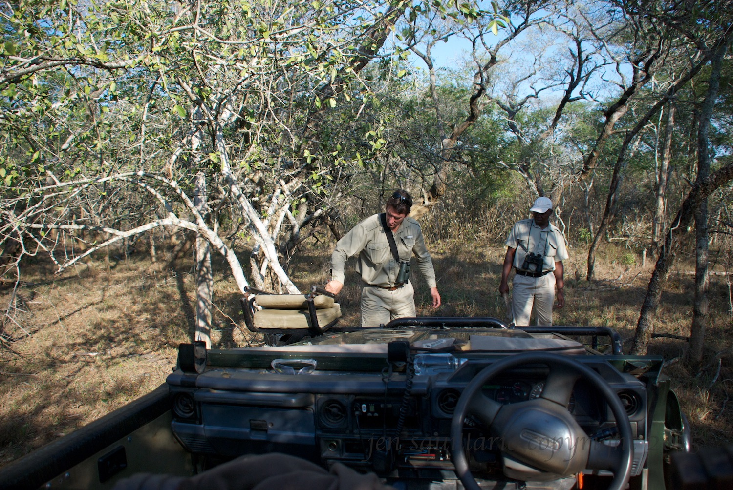 Giles and Able dealing with a stubborn tree while tracking the lioness and cubs.  I'm pretty sure Able was laughing the entire time.