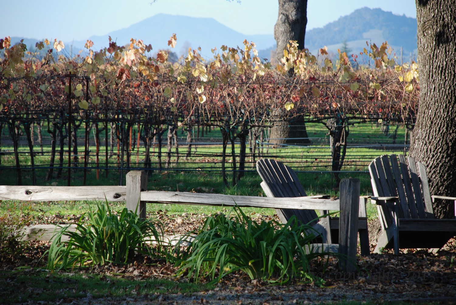 Fall at a Winery (2008)