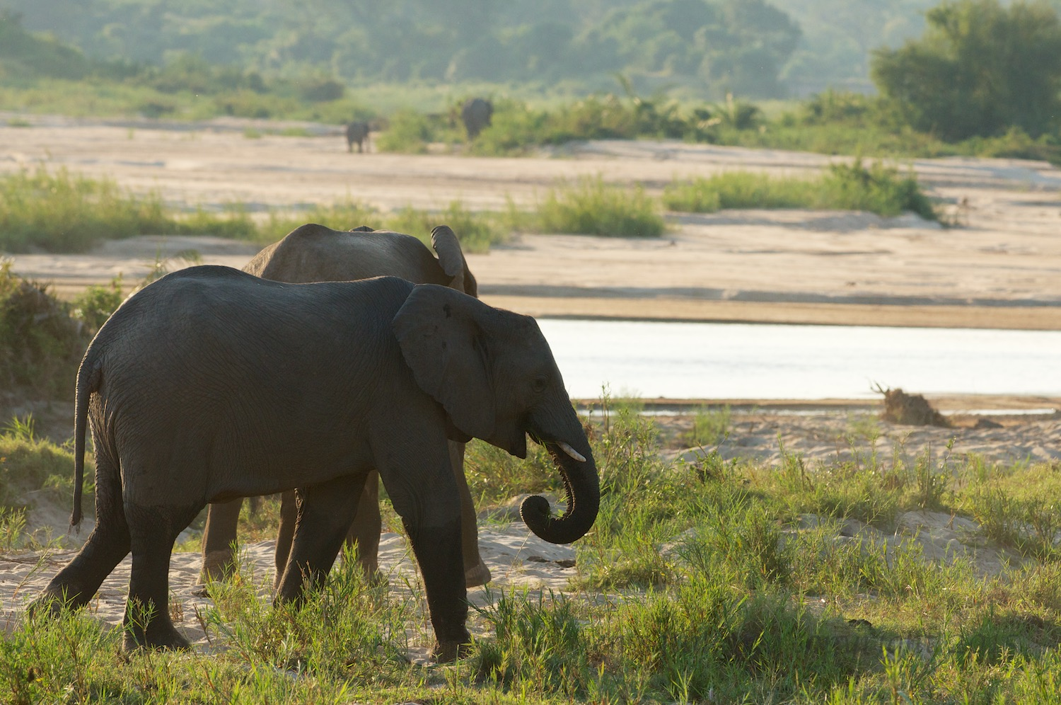 Elephants by the Sand River