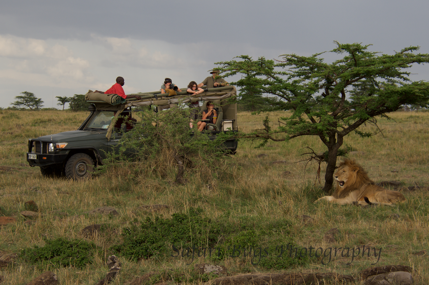 A family staying at Serian getting some shots of the male lion.