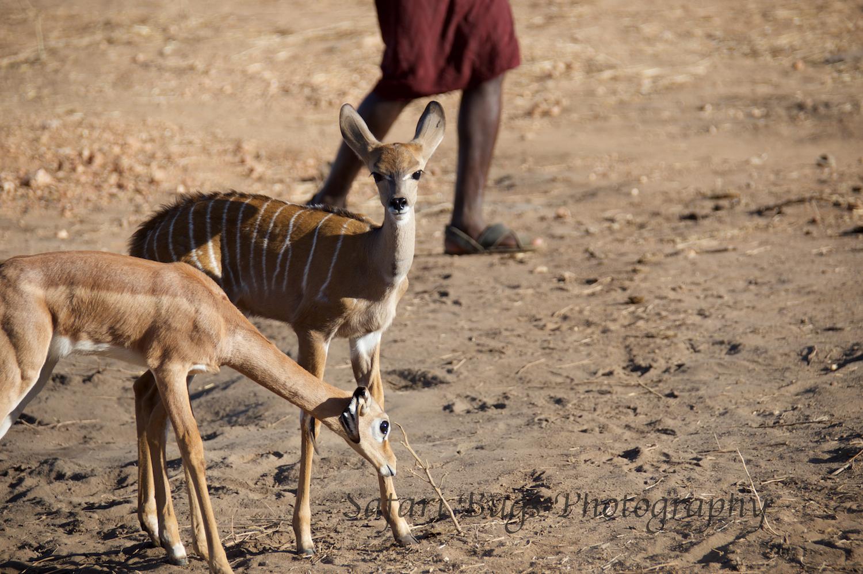 Sarara Safari Bugs (22).jpg