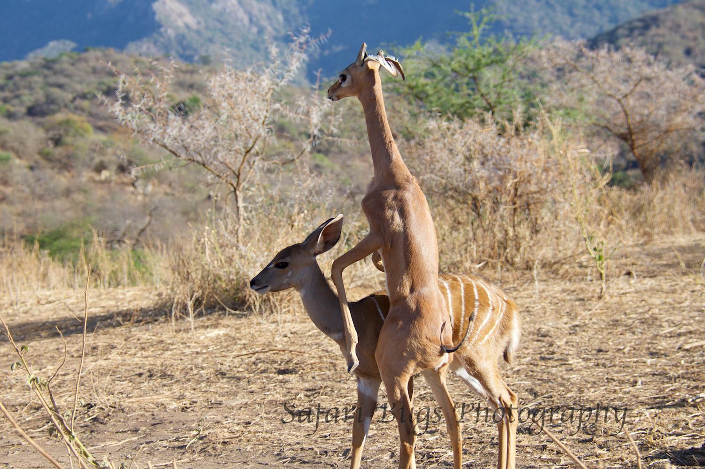 Sarara Safari Bugs (23).jpg