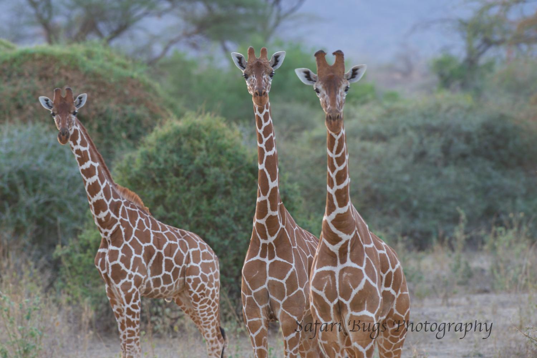 Sarara Safari Bugs (31).jpg