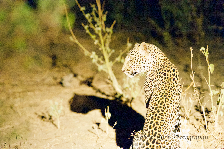 Sarara Safari Bugs (35).jpg