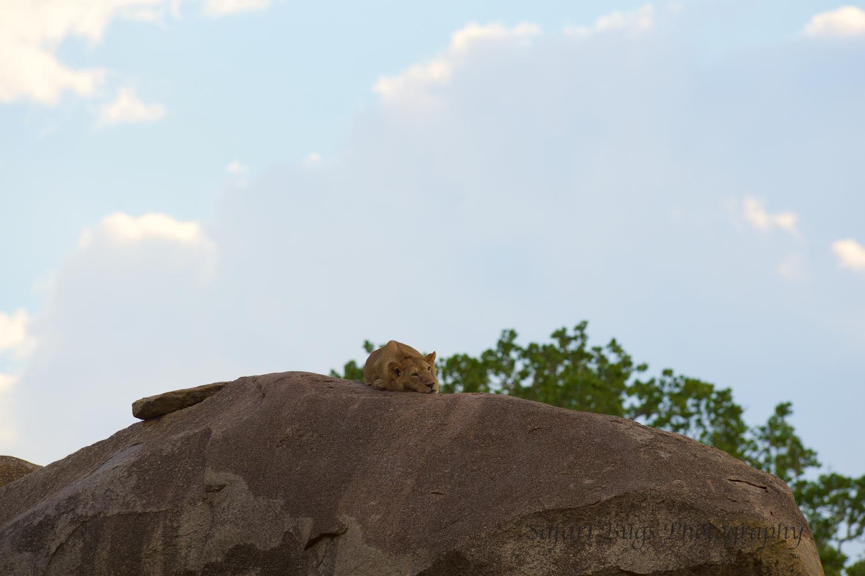 Safari Bugs Bushtops 1 evening drive (1).jpg