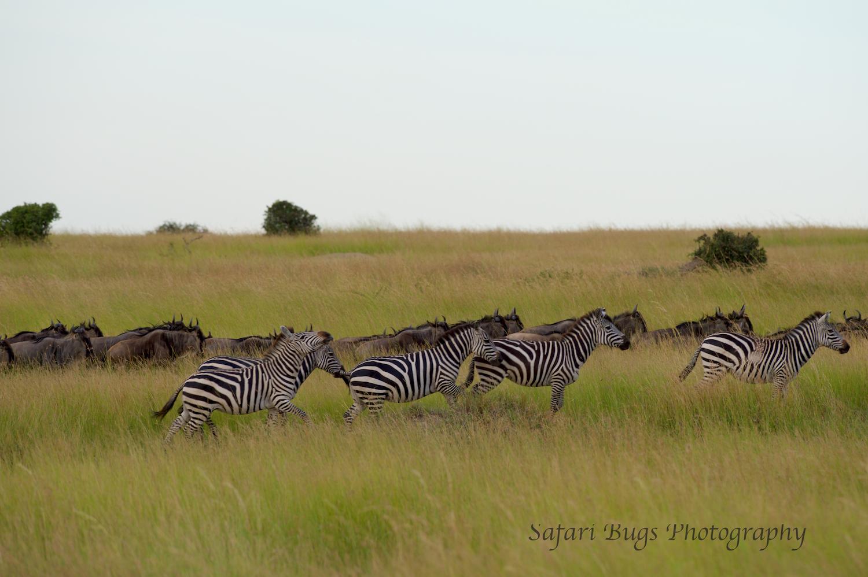 Safari Bugs Bushtops 1 evening drive (2).jpg