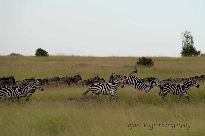 Safari Bugs Bushtops 1 evening drive (3).jpg