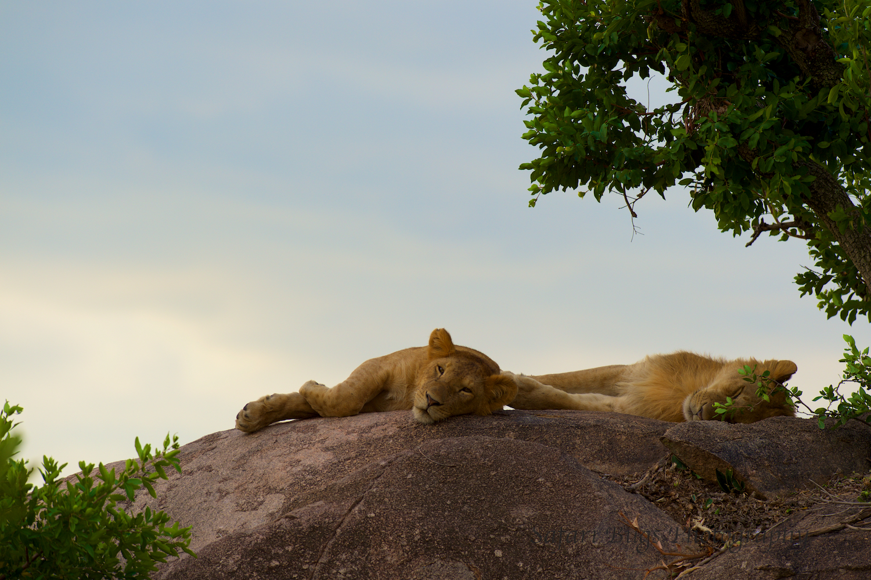 Safari Bugs Bushtops 1 evening drive.jpg