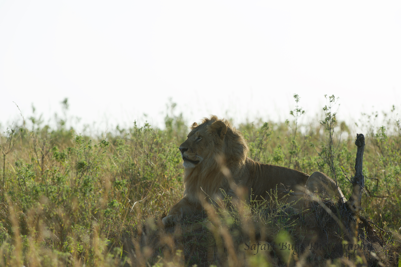 Safari Bugs Bushtops 1 day drive (2).jpg