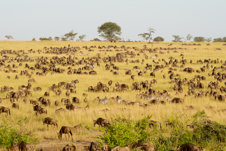 Safari Bugs Bushtops 1 day drive.jpg