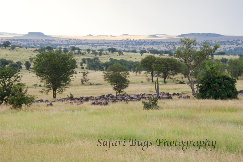 Safari Bugs Bushtops 1 evening drive (5).jpg
