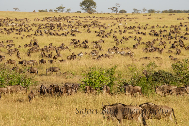 Safari Bugs Bushtops 1 day drive (9).jpg