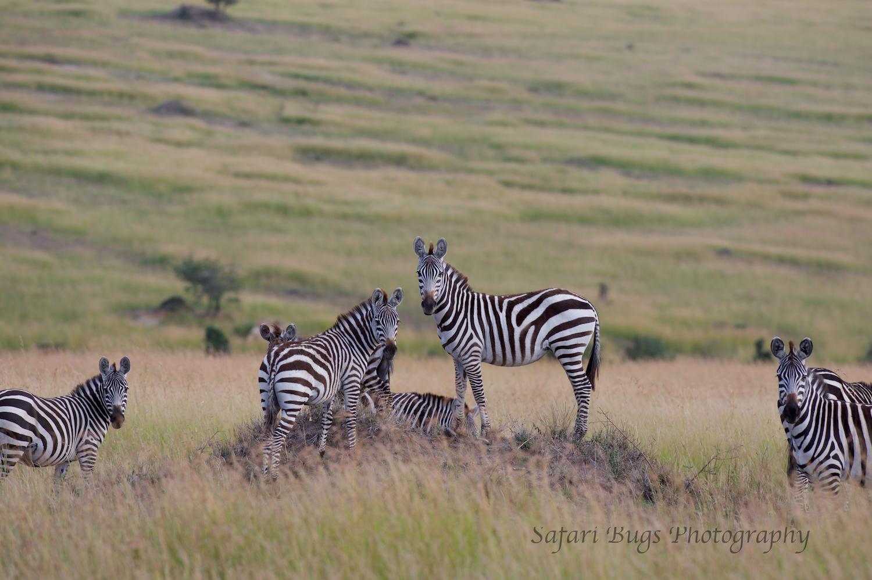 Safari Bugs Bushtops day three (1).jpg