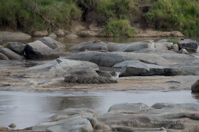 Safari Bugs Bushtops day three (2).jpg