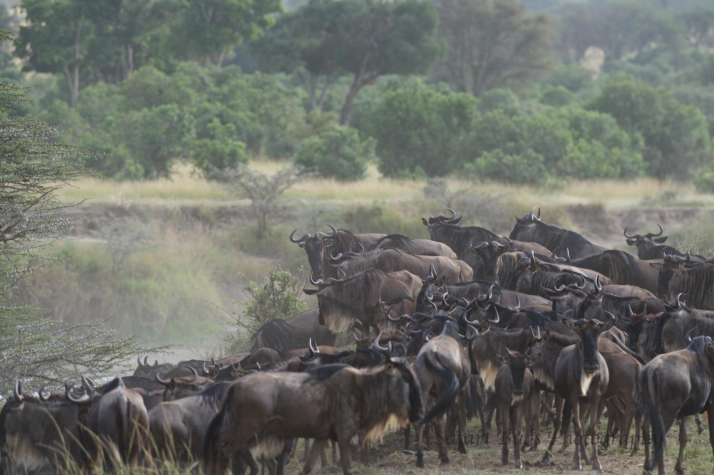 Safari Bugs Bushtops day three (4).jpg