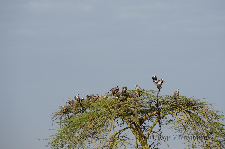 Safari Bugs Bushtops day three (7).jpg