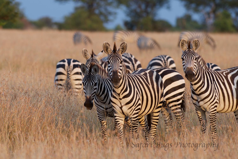 Safari Bugs Bushtops day three.jpg