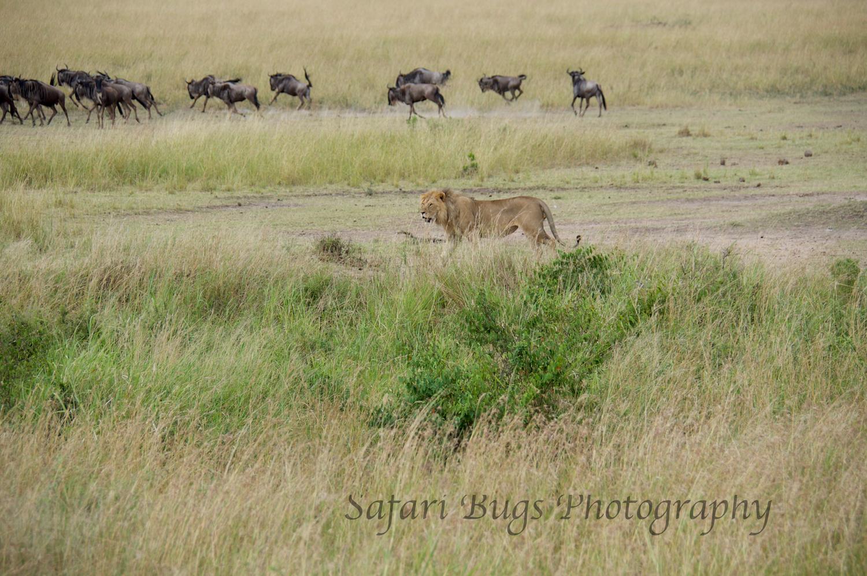 Safari Bugs Bushtops day three (10).jpg