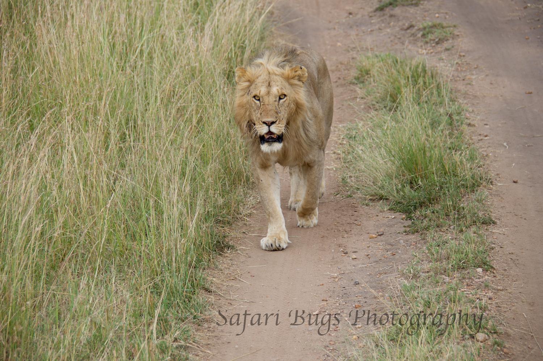 Safari Bugs Bushtops day three (9).jpg