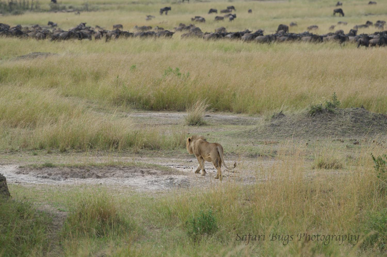 Safari Bugs Bushtops day three (11).jpg