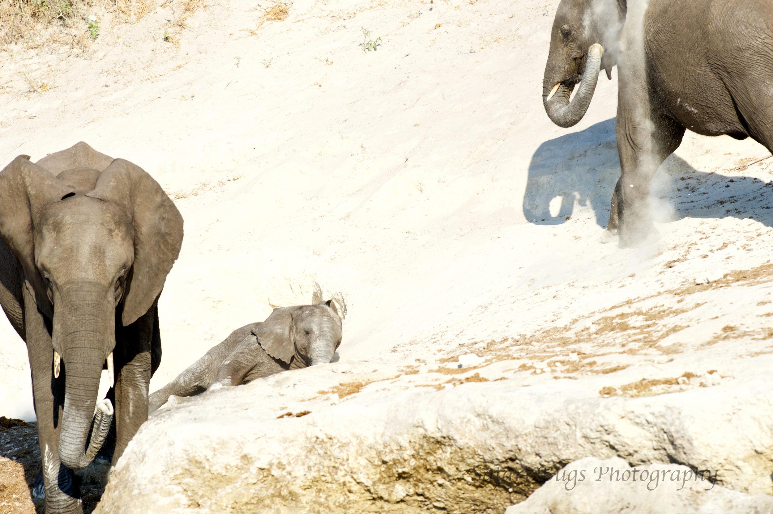 Chobe Game Lodge elephant (2).jpg