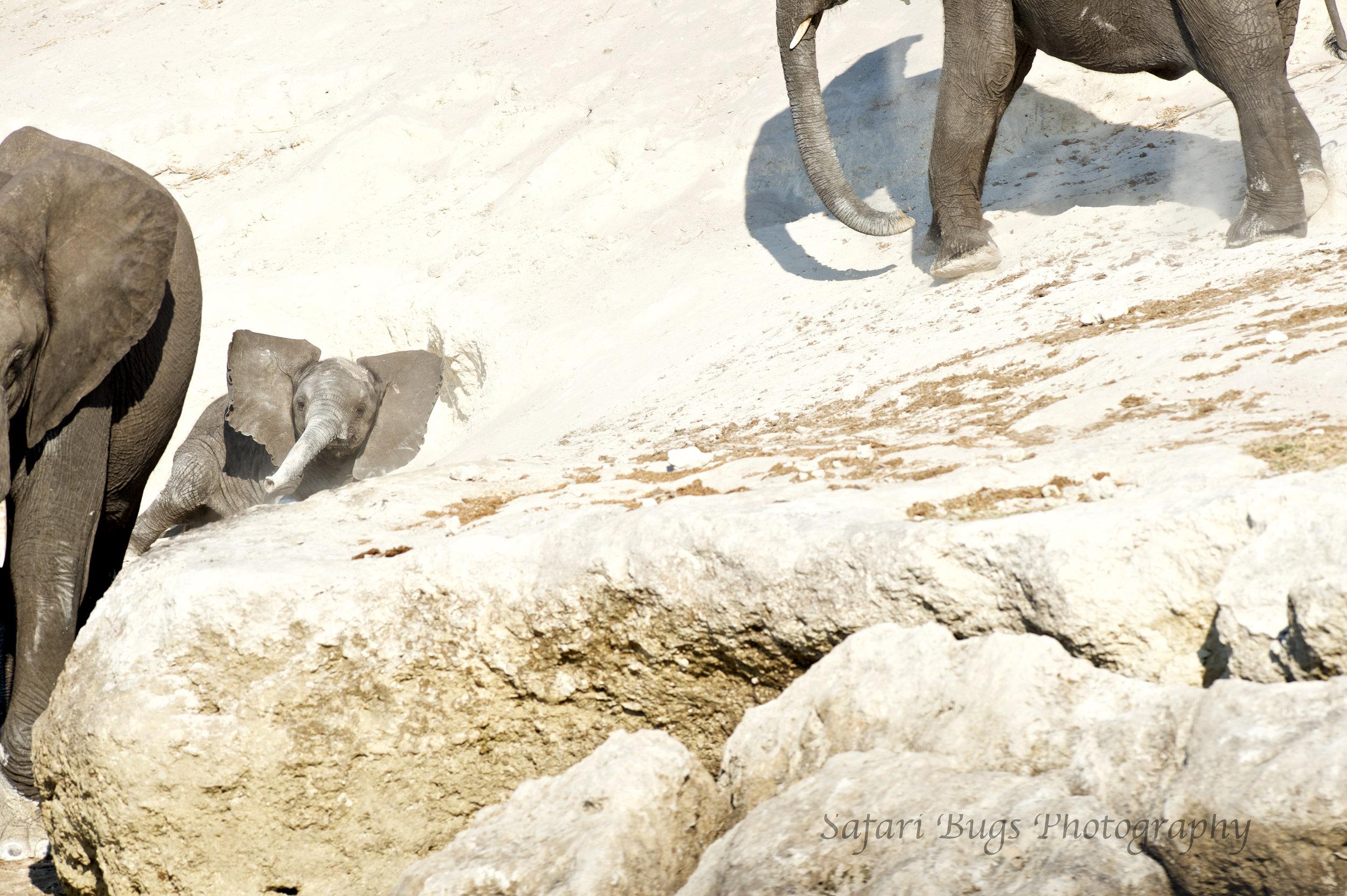 Chobe Game Lodge elephant (3).jpg