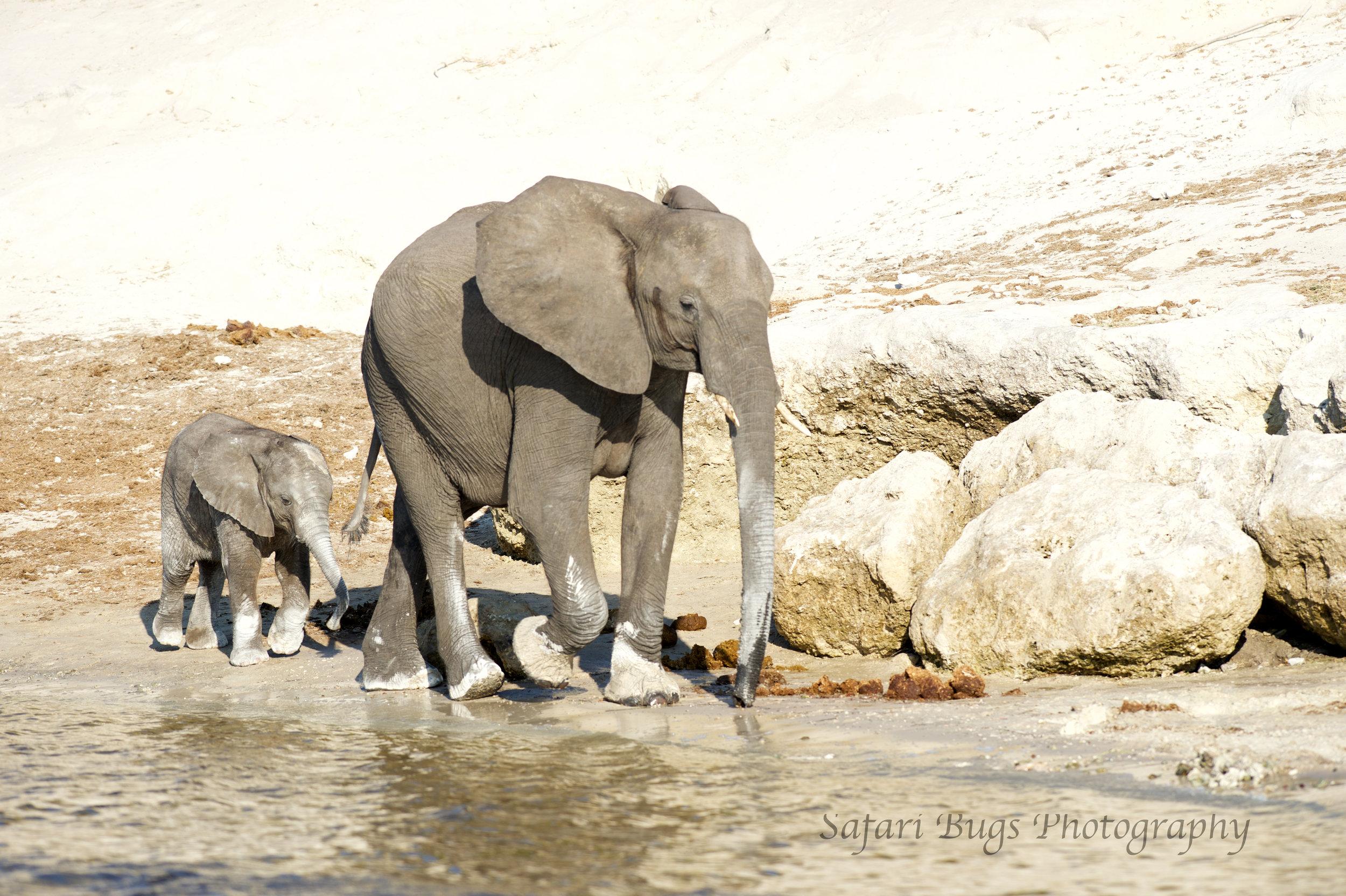 Chobe Game Lodge elephant (6).jpg