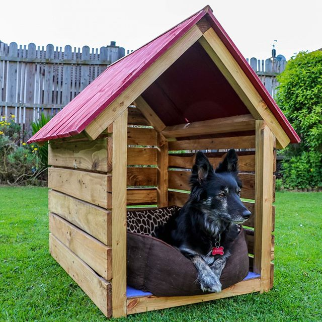 Dog house complete ✅ couldn't be delivered without Cassie giving her final seal of approval, I think she wants one now too. This one is off to Carrickfergus to become a new little puppies home 🐶🏠 if you are interested in purchasing your very own bespoke hand made dog house get in contact with me using the links on my profile, prices start from £80 👌🏻🤙🏻 . . . #doghouse #handmade #bespoke #woodwork #dog #puppy #workshop #design #craft #artisan #recycled #palletwood #sustainableliving #northernireland #supportyourlocalartist #studiolife #artist #interiordesign #garden #landscapedesign