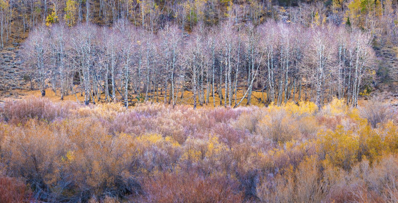 grant-longenbaugh-Eastern-Sierra-25.jpg