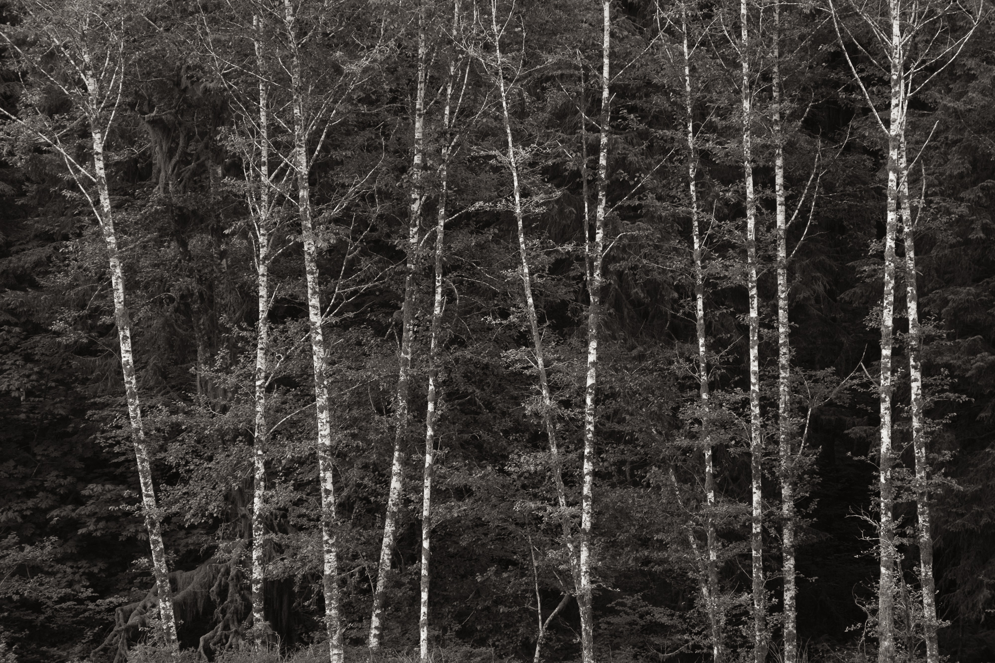 Longenbaugh-olympic-national-park-31.jpg