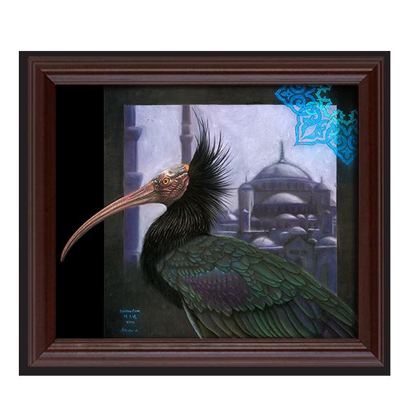 Northern Bald Ibis & Blue Mosque