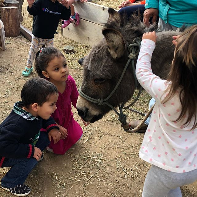 thank you Los Padres Outfitters for bring Burrito the donkey to school today and Jennifer (Mesa Produce) for making it happen.