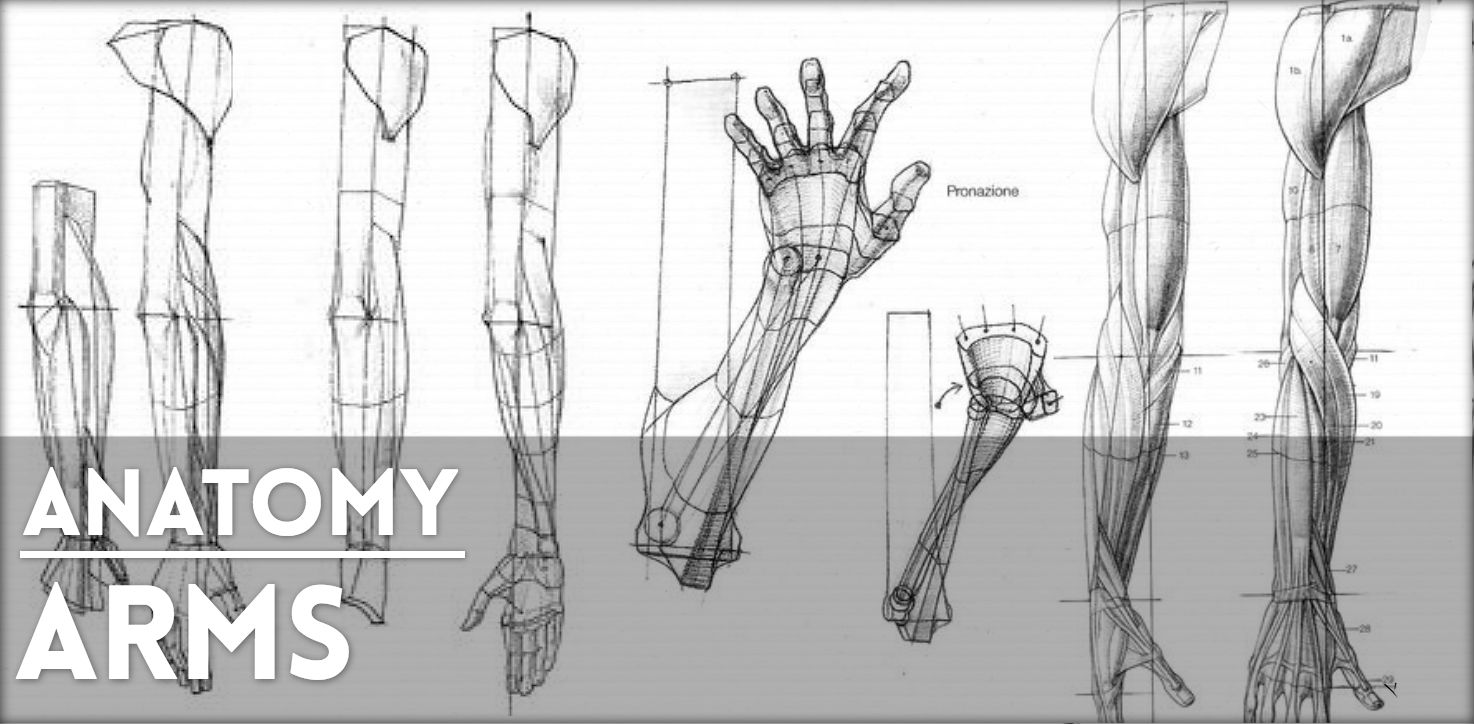 REF-Arms.jpg