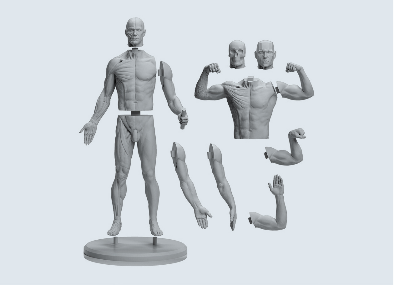 Anatomy Figures For Character Designers
