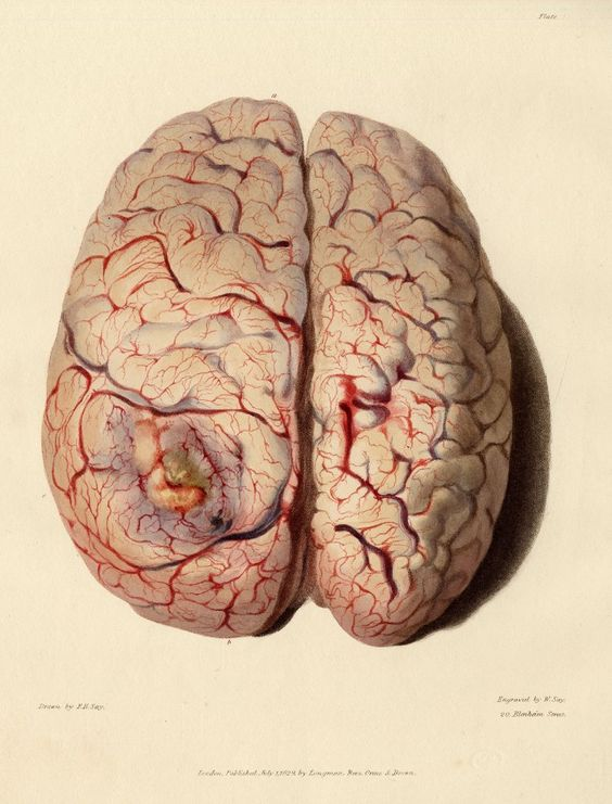 https://www.pinterest.ie/characterdesigh/character-anatomy-organs/