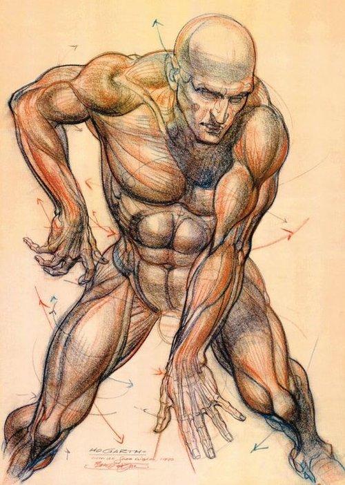Character Anatomy Male