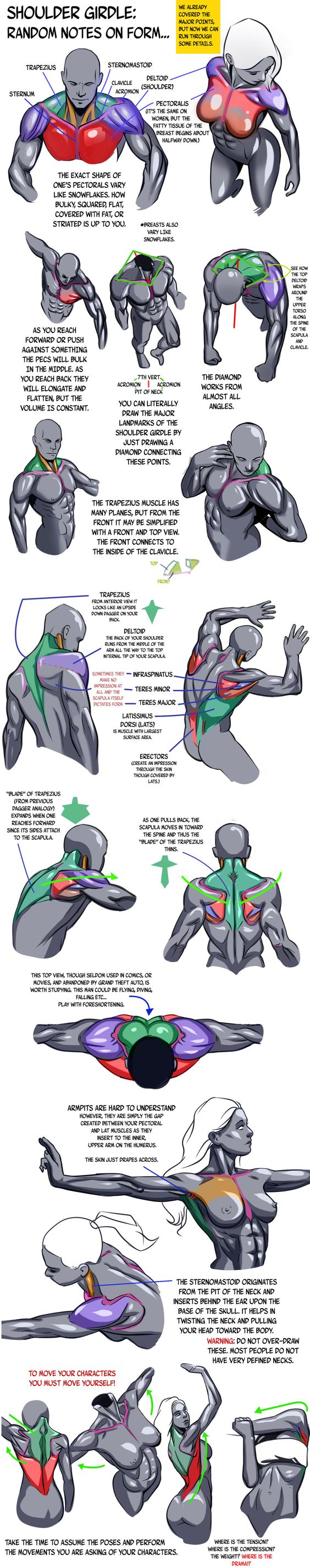 https://www.pinterest.ie/characterdesigh/character-anatomy-shoulder/