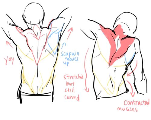 https://www.pinterest.ie/characterdesigh/character-anatomy-back/