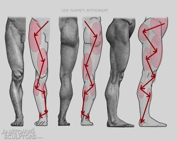 https://www.pinterest.ie/characterdesigh/character-anatomy-legs/