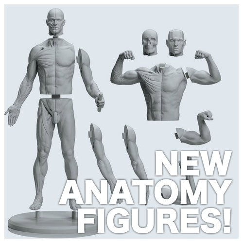 BANNER-Anatomy Figures.png