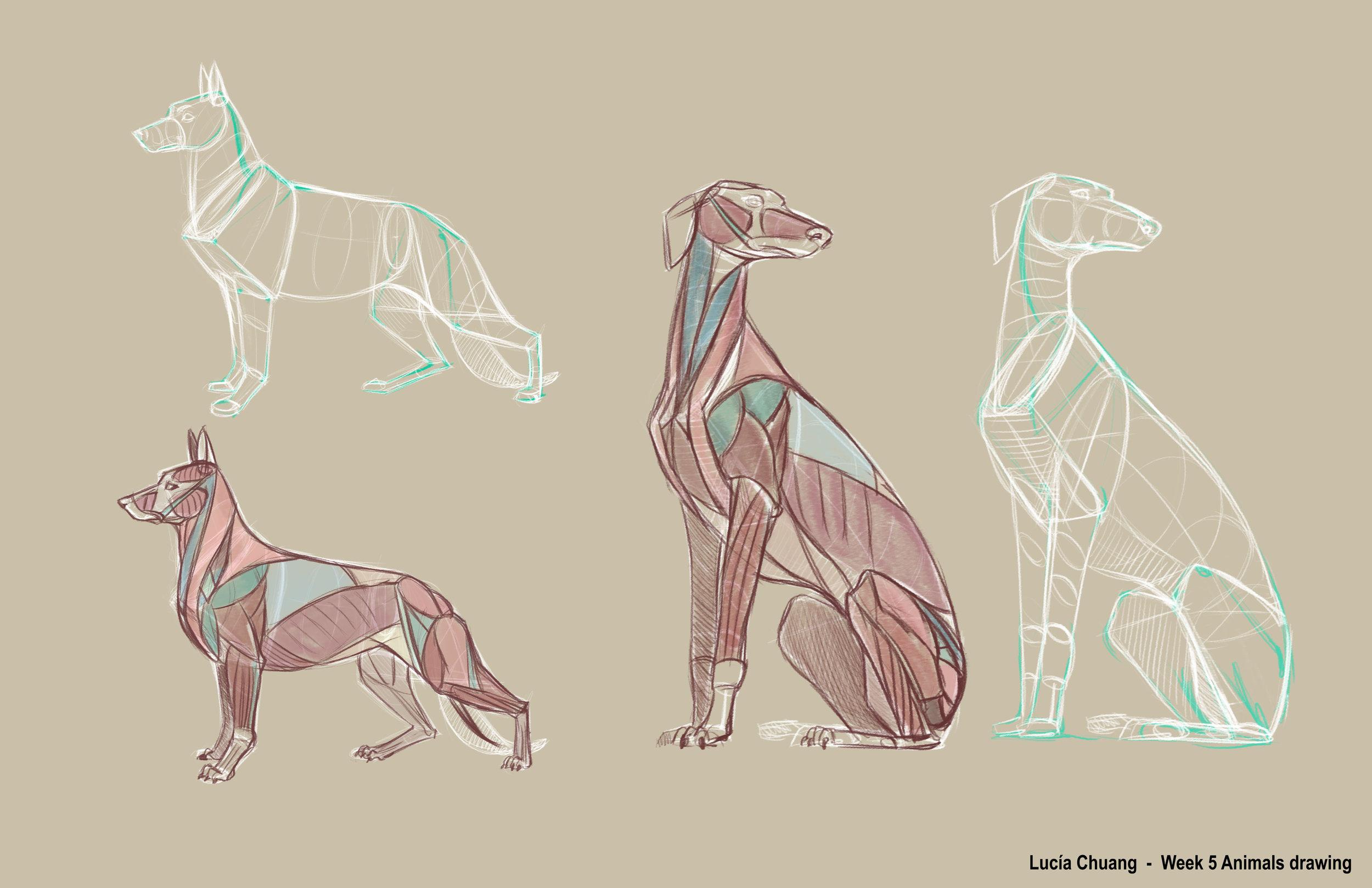 lucia_chuang-animal_drawing_-wk5-1011807106.jpeg
