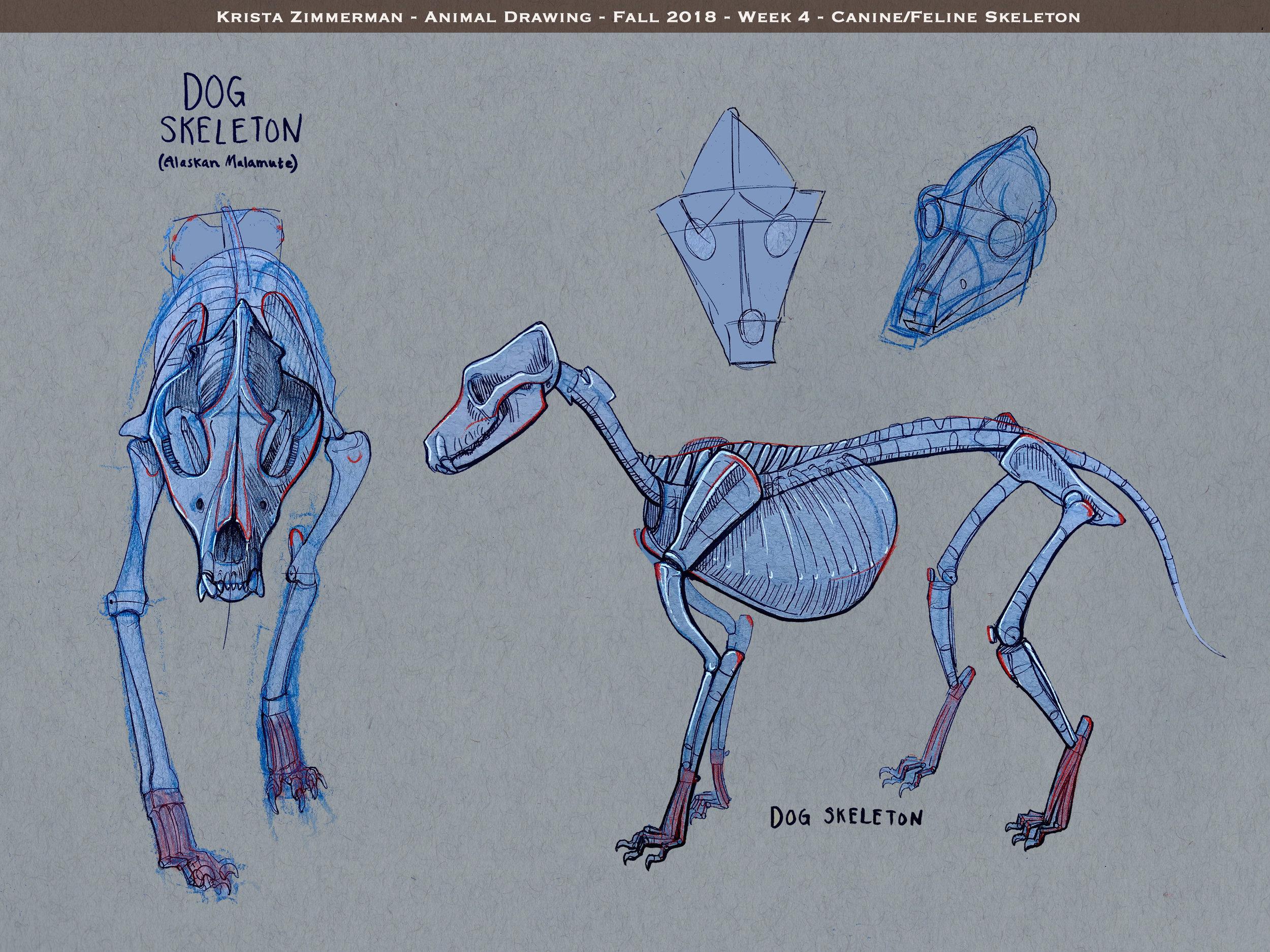 krista_zimmerman-animal_drawing_-wk4-976466088.jpg