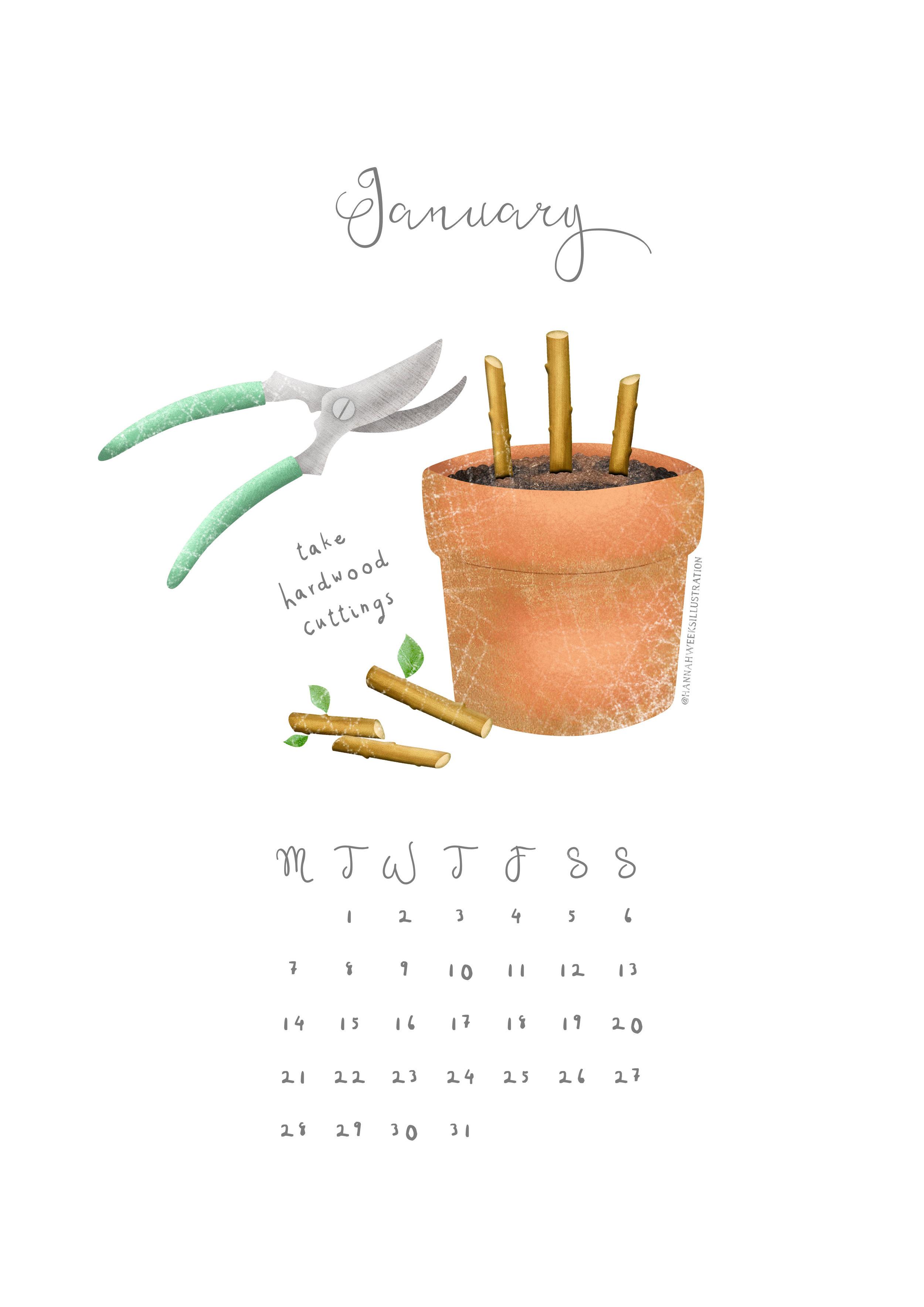 Hannah Weeks Illustration - January - Hardwood Cuttings - A4.jpg