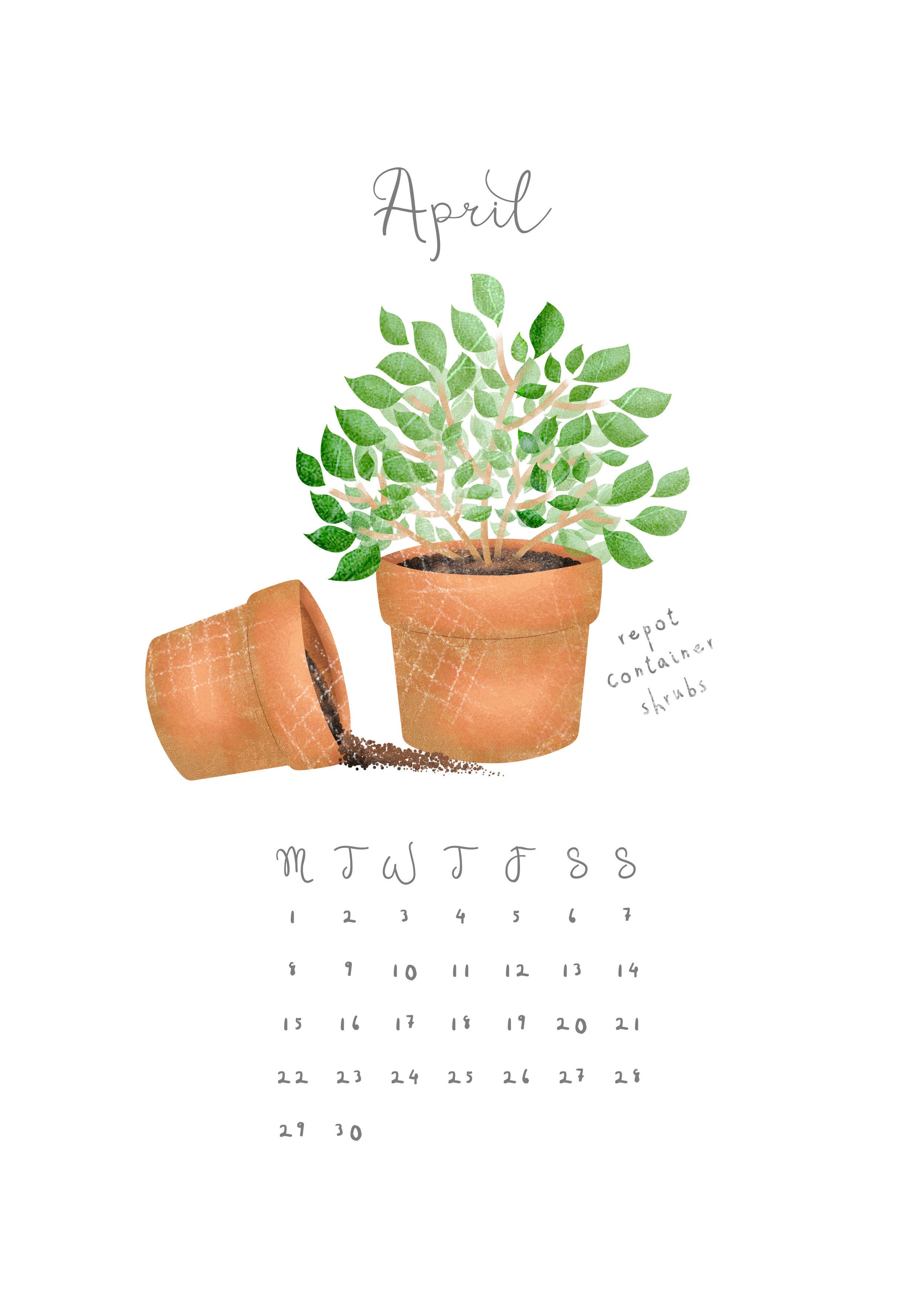 Hannah Weeks Illustration - April - Repot Shrubs - A4.jpg
